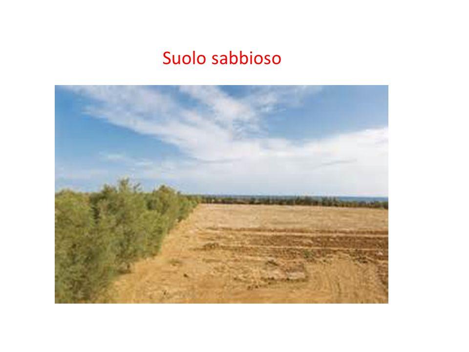 Il suolo ha vari strati e questi sono l' humus l' acqua l' argilla la sabbia la ghiaia