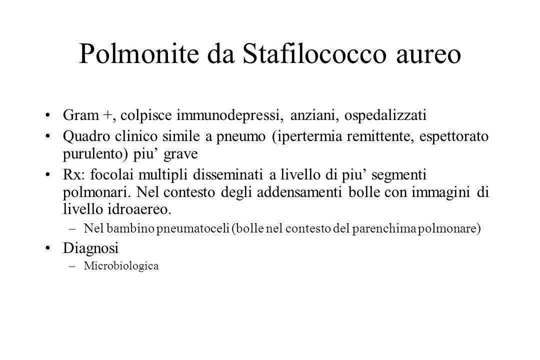 Polmonite da Stafilococco aureo Gram +, colpisce immunodepressi, anziani, ospedalizzati Quadro clinico simile a pneumo (ipertermia remittente, espetto