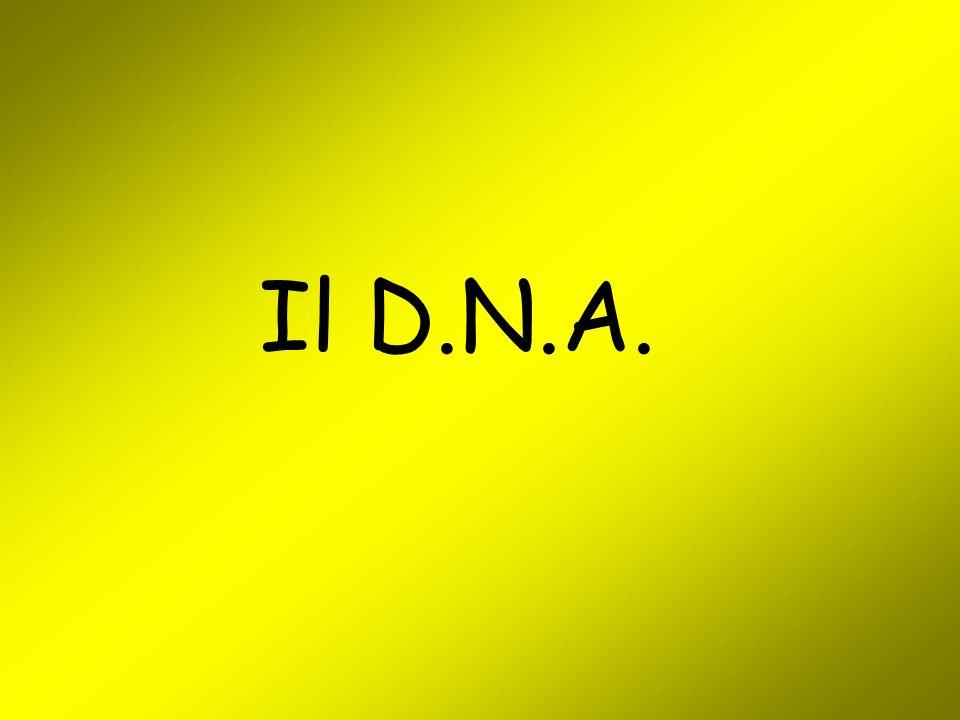 Il D.N.A.