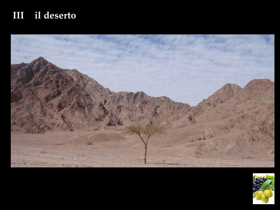 IIIil deserto