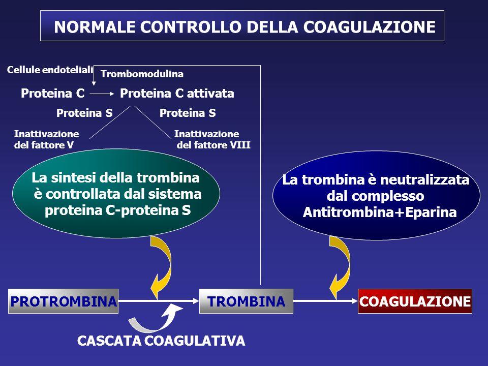 NORMALE CONTROLLO DELLA COAGULAZIONE PROTROMBINATROMBINACOAGULAZIONE La trombina è neutralizzata dal complesso Antitrombina+Eparina La sintesi della trombina è controllata dal sistema proteina C-proteina S Trombomodulina Proteina CProteina C attivata Inattivazione del fattore V Inattivazione del fattore VIII Proteina S Cellule endoteliali CASCATA COAGULATIVA