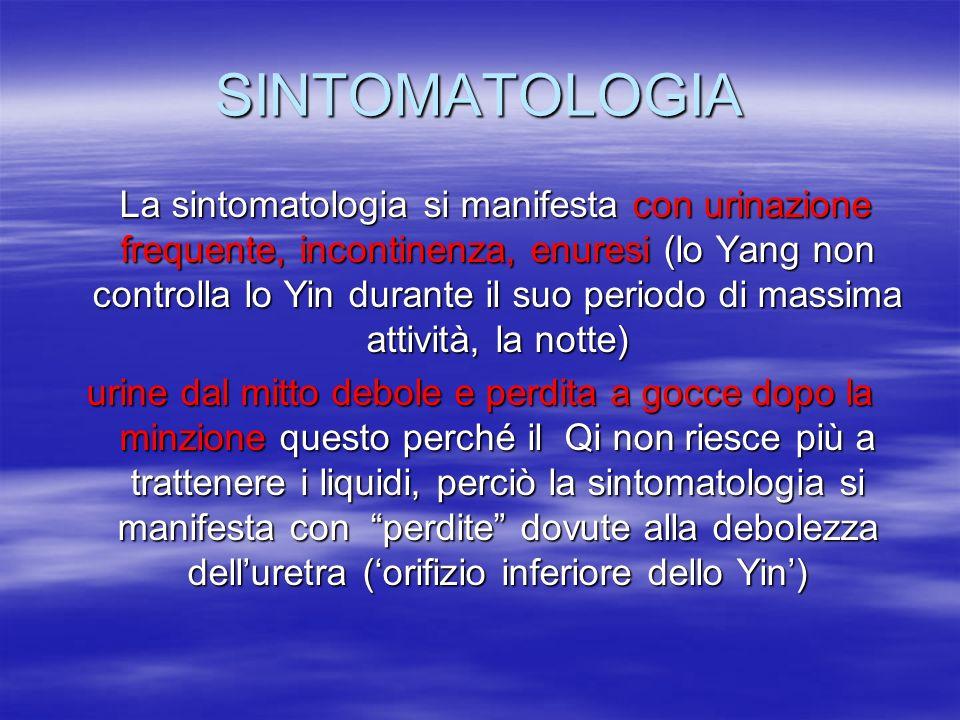 SINTOMATOLOGIA La sintomatologia si manifesta con urinazione frequente, incontinenza, enuresi (lo Yang non controlla lo Yin durante il suo periodo di