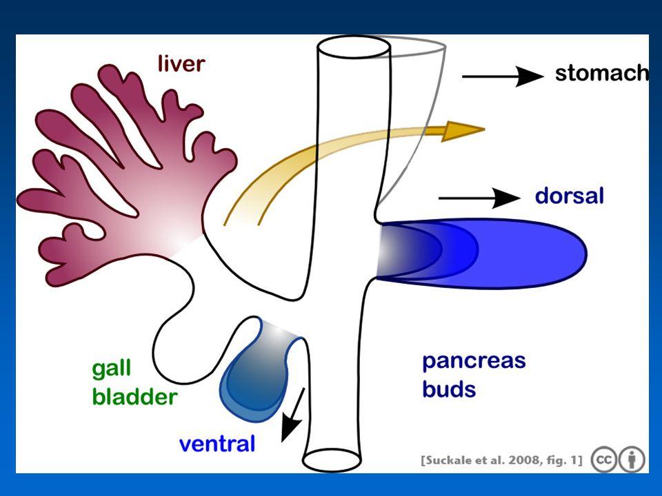 L'ectopia di tessuto pancreatico non è una condizione infrequente; Tale anormalità di sviluppo, può essere rilevata sia durante un intervento (1 caso su 500 interventi sull'addome superiore), che in corso di riscontro autoptico (tra 1% e 2%).