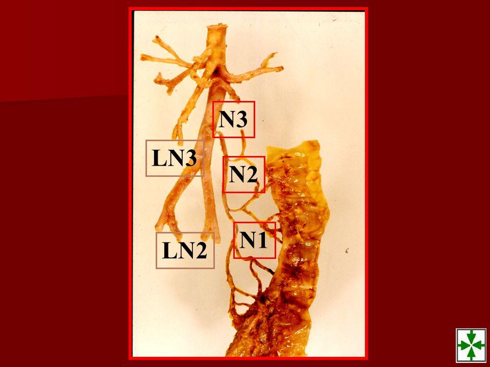 N3 N2 N1 LN3 LN2