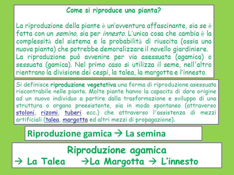 Come si riproduce una pianta? La riproduzione della piante è un ' avventura affascinante, sia se è fatta con un semino, sia per innesto. L ' unica cos