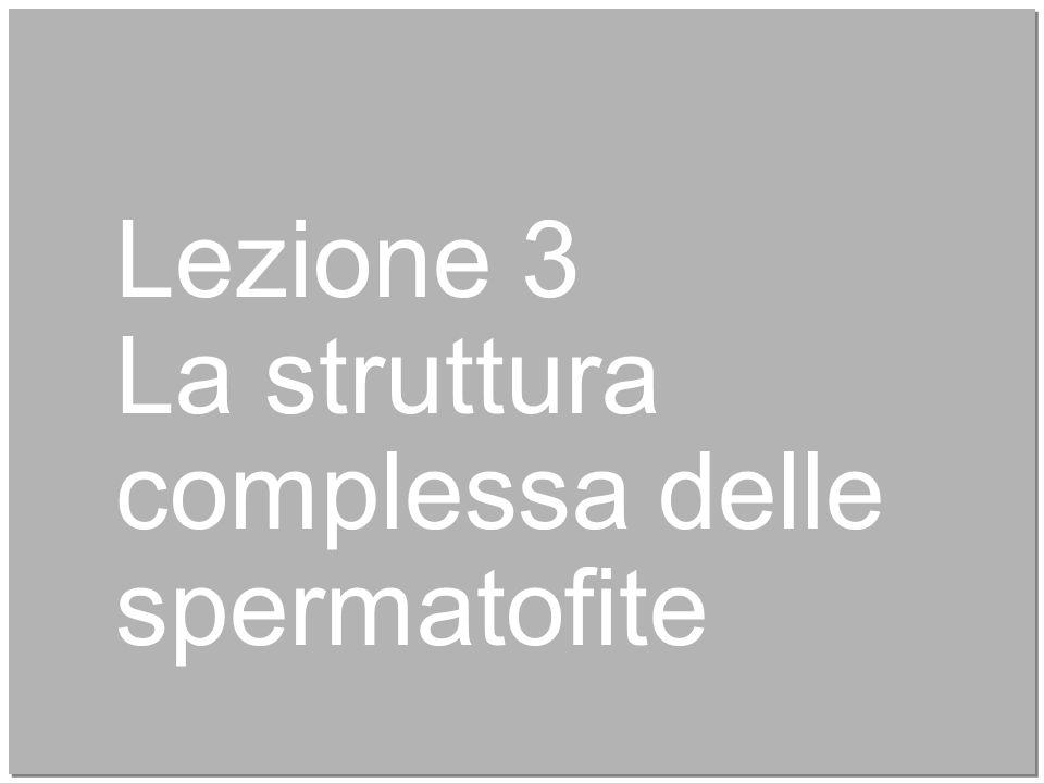 16 Lezione 3 La struttura complessa delle spermatofite