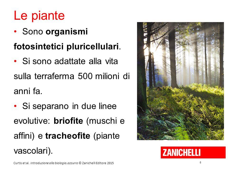 5 5 Curtis et al. Introduzione alla biologia.azzurro © Zanichelli Editore 2015 Le piante Sono organismi fotosintetici pluricellulari. Si sono adattate