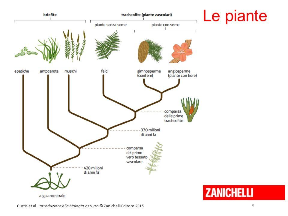 6 6 Curtis et al. Introduzione alla biologia.azzurro © Zanichelli Editore 2015 Le piante