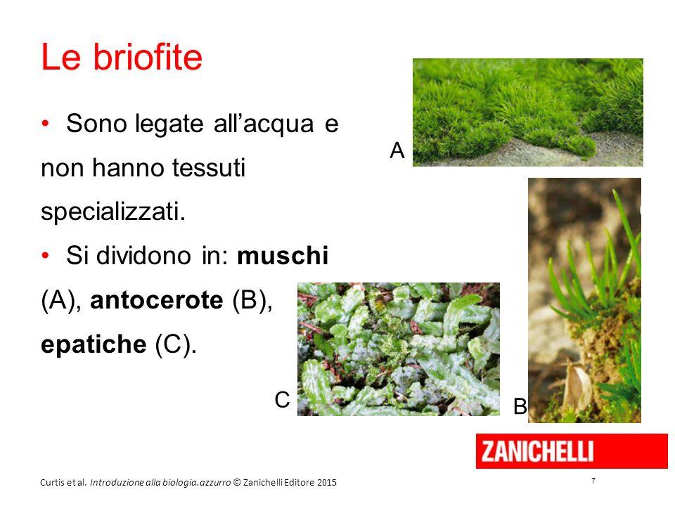 7 7 Curtis et al. Introduzione alla biologia.azzurro © Zanichelli Editore 2015 Le briofite Sono legate all'acqua e non hanno tessuti specializzati. Si