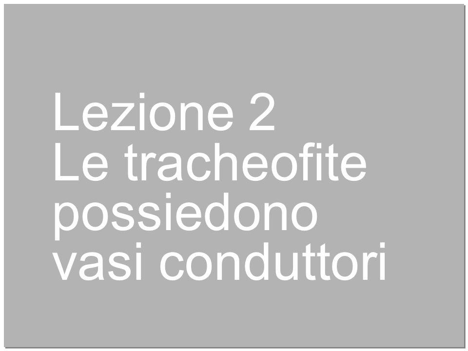 8 Lezione 2 Le tracheofite possiedono vasi conduttori