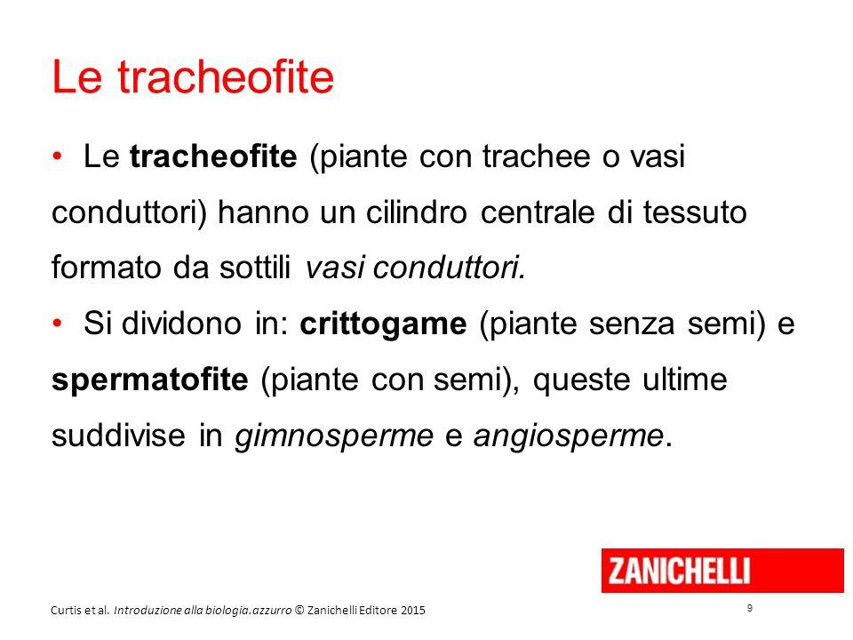 9 9 Curtis et al. Introduzione alla biologia.azzurro © Zanichelli Editore 2015 Le tracheofite Le tracheofite (piante con trachee o vasi conduttori) ha