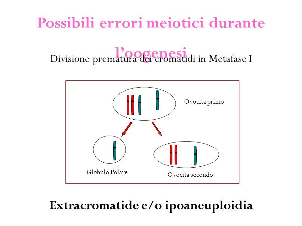 Possibili errori meiotici durante l'oogenesi Divisione prematura dei cromatidi in Metafase I Ovocita primo Ovocita secondo Globulo Polare Extracromatide e/o ipoaneuploidia