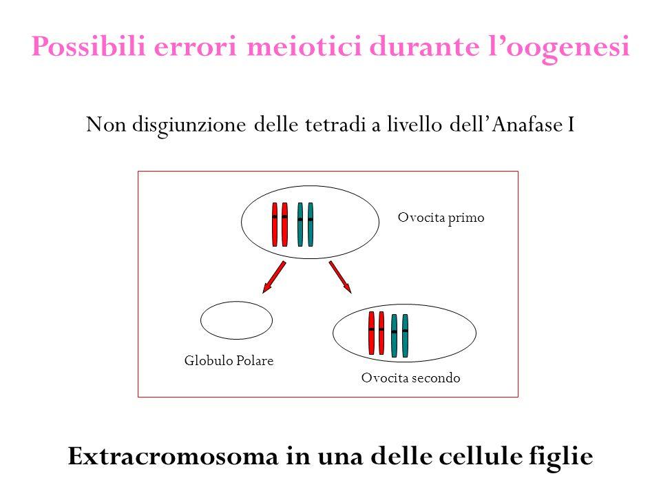 Possibili errori meiotici durante l'oogenesi Non disgiunzione delle tetradi a livello dell'Anafase I Extracromosoma in una delle cellule figlie Ovocita primo Ovocita secondo Globulo Polare