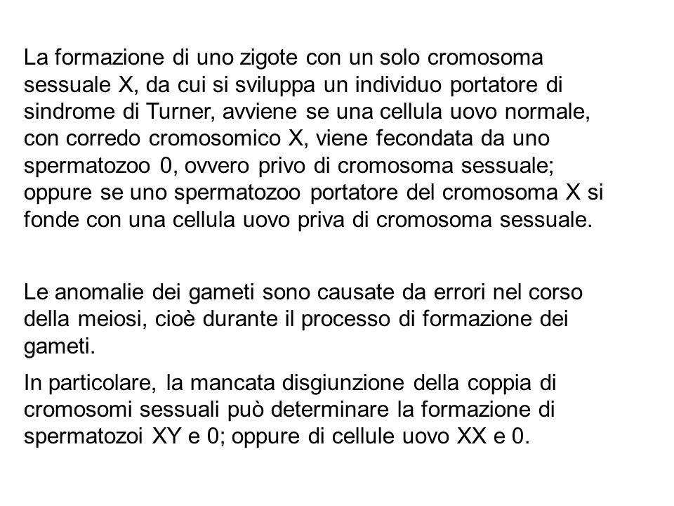 La formazione di uno zigote con un solo cromosoma sessuale X, da cui si sviluppa un individuo portatore di sindrome di Turner, avviene se una cellula uovo normale, con corredo cromosomico X, viene fecondata da uno spermatozoo 0, ovvero privo di cromosoma sessuale; oppure se uno spermatozoo portatore del cromosoma X si fonde con una cellula uovo priva di cromosoma sessuale.