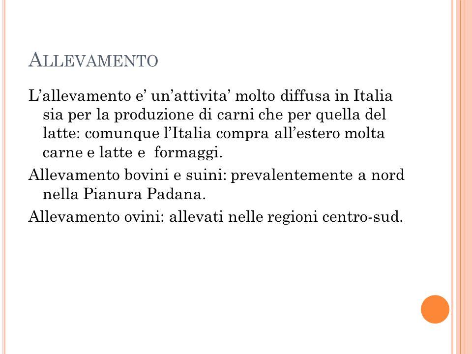 A LLEVAMENTO L'allevamento e' un'attivita' molto diffusa in Italia sia per la produzione di carni che per quella del latte: comunque l'Italia compra all'estero molta carne e latte e formaggi.