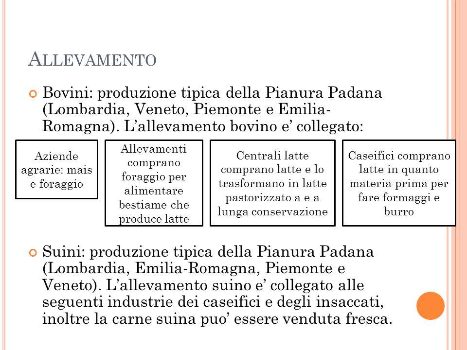 A LLEVAMENTO Bovini: produzione tipica della Pianura Padana (Lombardia, Veneto, Piemonte e Emilia- Romagna). L'allevamento bovino e' collegato: Suini: