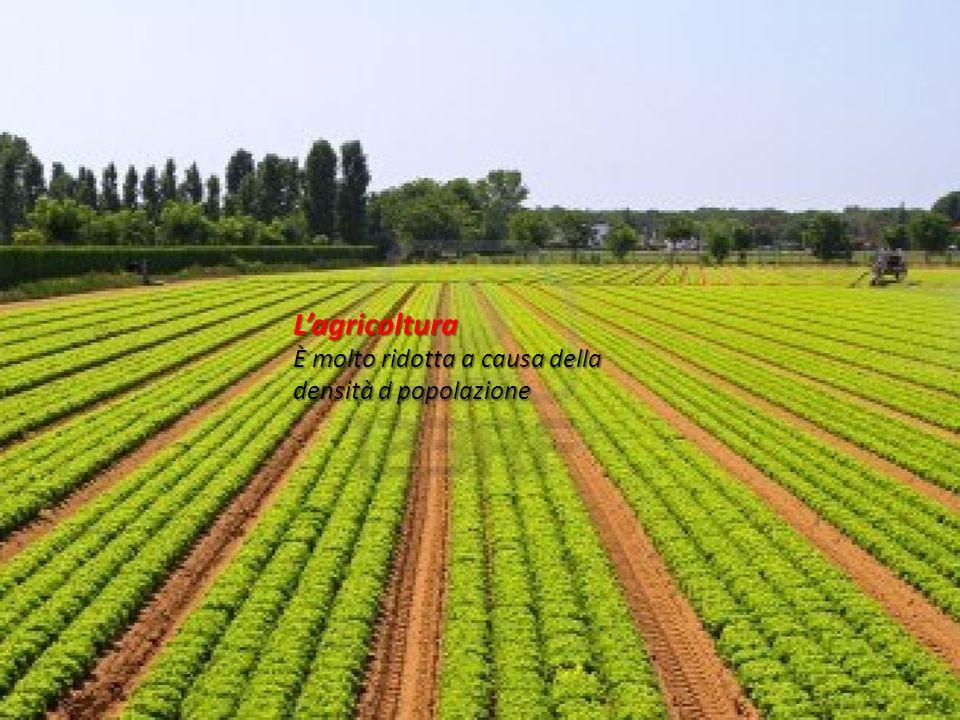 L'agricoltura È molto ridotta a causa della densità d popolazione