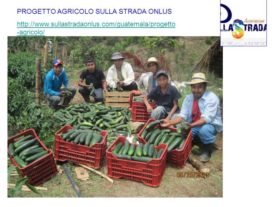 PROGETTO AGRICOLO SULLA STRADA ONLUS http://www.sullastradaonlus.com/guatemala/progetto -agricolo/