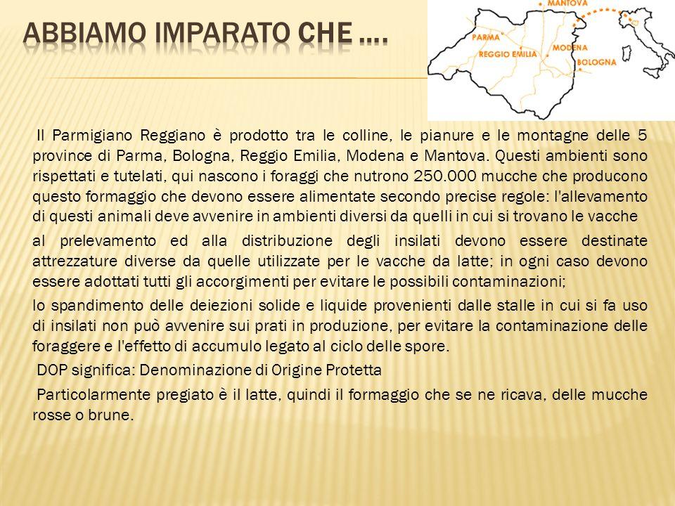 Il Parmigiano Reggiano è prodotto tra le colline, le pianure e le montagne delle 5 province di Parma, Bologna, Reggio Emilia, Modena e Mantova. Questi
