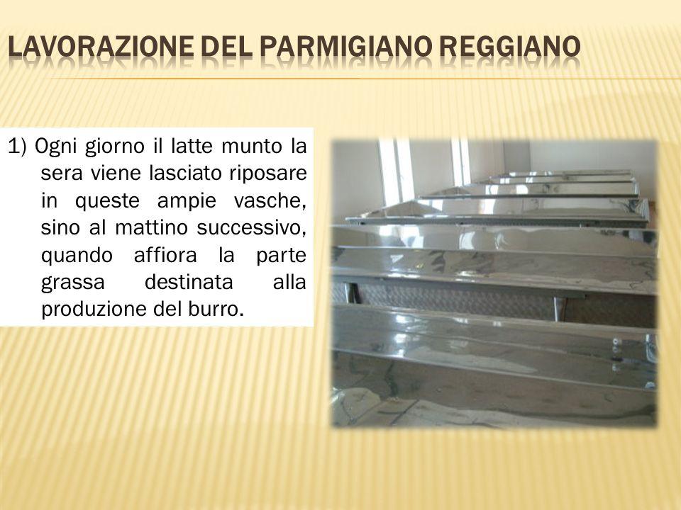 1) Ogni giorno il latte munto la sera viene lasciato riposare in queste ampie vasche, sino al mattino successivo, quando affiora la parte grassa desti