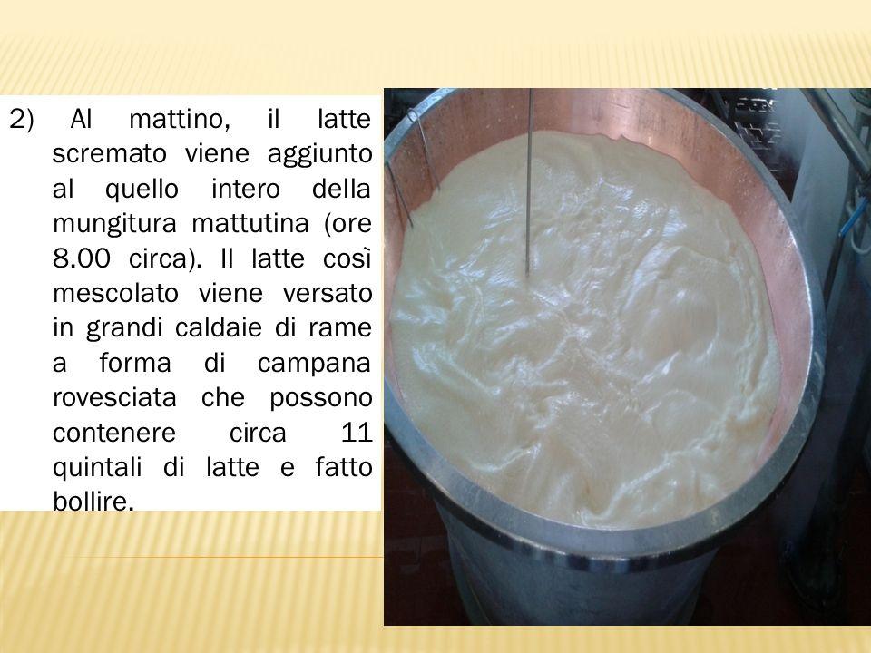 2) Al mattino, il latte scremato viene aggiunto al quello intero della mungitura mattutina (ore 8.00 circa). Il latte così mescolato viene versato in