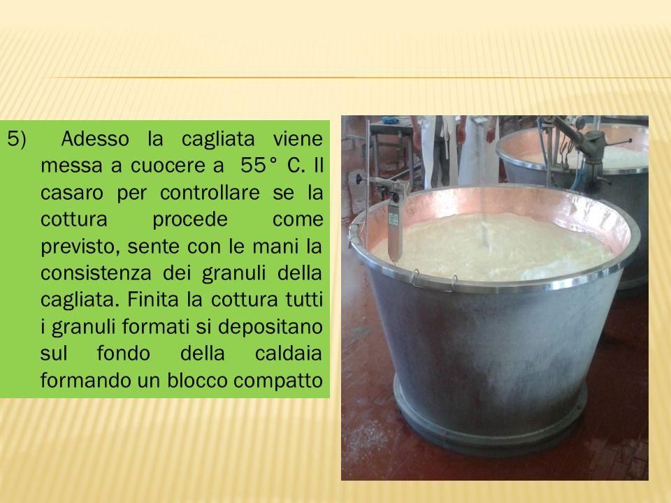 5) Adesso la cagliata viene messa a cuocere a 55° C. Il casaro per controllare se la cottura procede come previsto, sente con le mani la consistenza d
