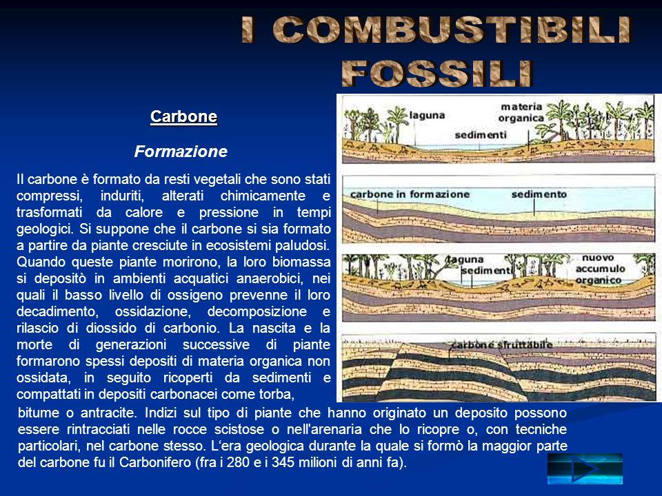 Formazione Carbone Il carbone è formato da resti vegetali che sono stati compressi, induriti, alterati chimicamente e trasformati da calore e pression