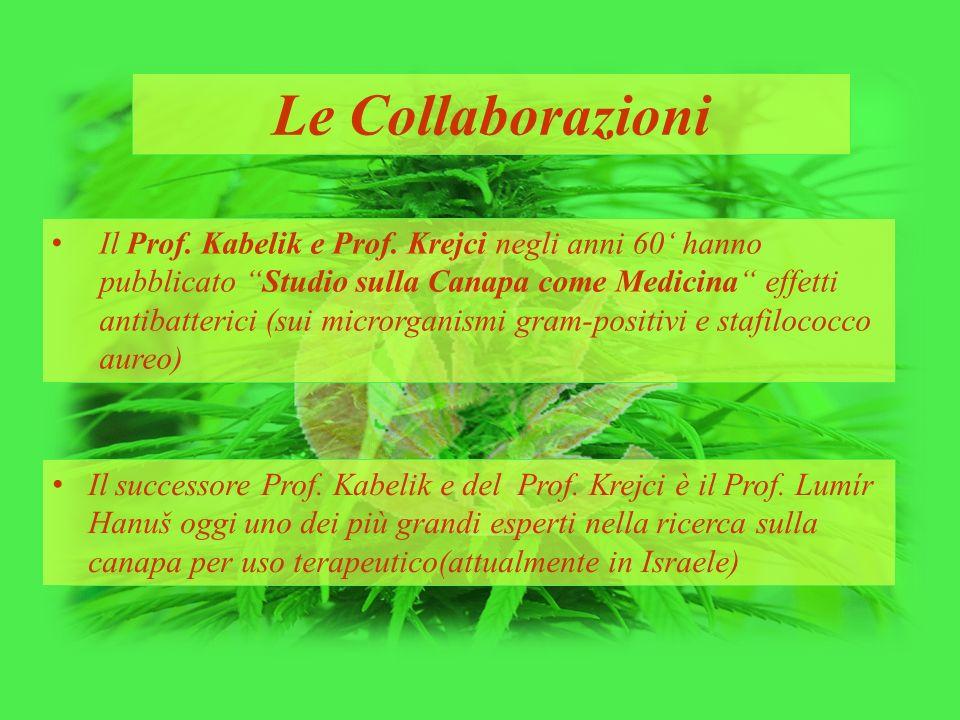 """Le Collaborazioni Il Prof. Kabelik e Prof. Krejci negli anni 60' hanno pubblicato """"Studio sulla Canapa come Medicina"""" effetti antibatterici (sui micro"""