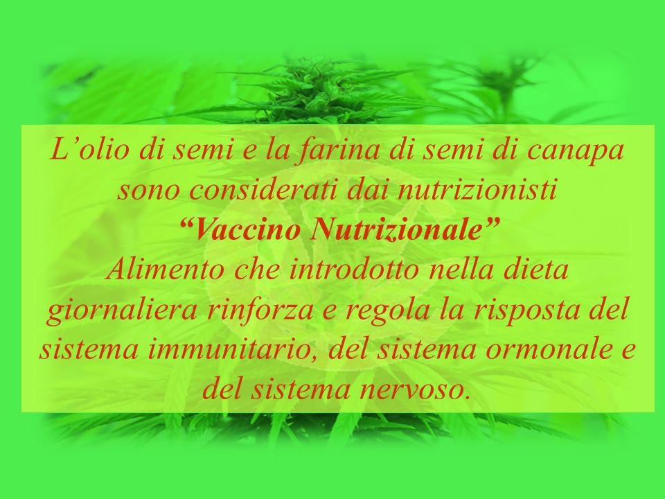 """L'olio di semi e la farina di semi di canapa sono considerati dai nutrizionisti """"Vaccino Nutrizionale"""" Alimento che introdotto nella dieta giornaliera"""