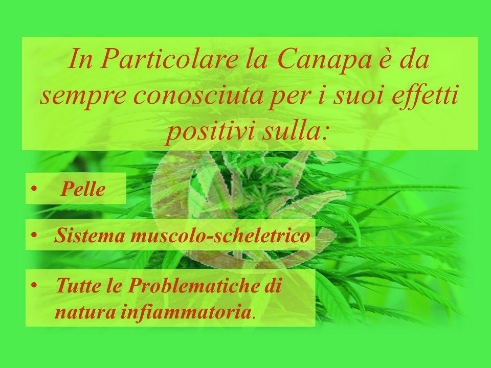 In Particolare la Canapa è da sempre conosciuta per i suoi effetti positivi sulla: Pelle Sistema muscolo-scheletrico Tutte le Problematiche di natura