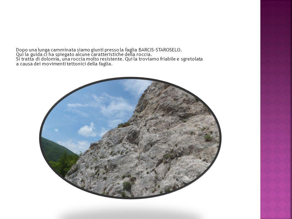 Dopo una lunga camminata siamo giunti presso la faglia BARCIS-STAROSELO. Qui la guida ci ha spiegato alcune caratteristiche della roccia. Si tratta di