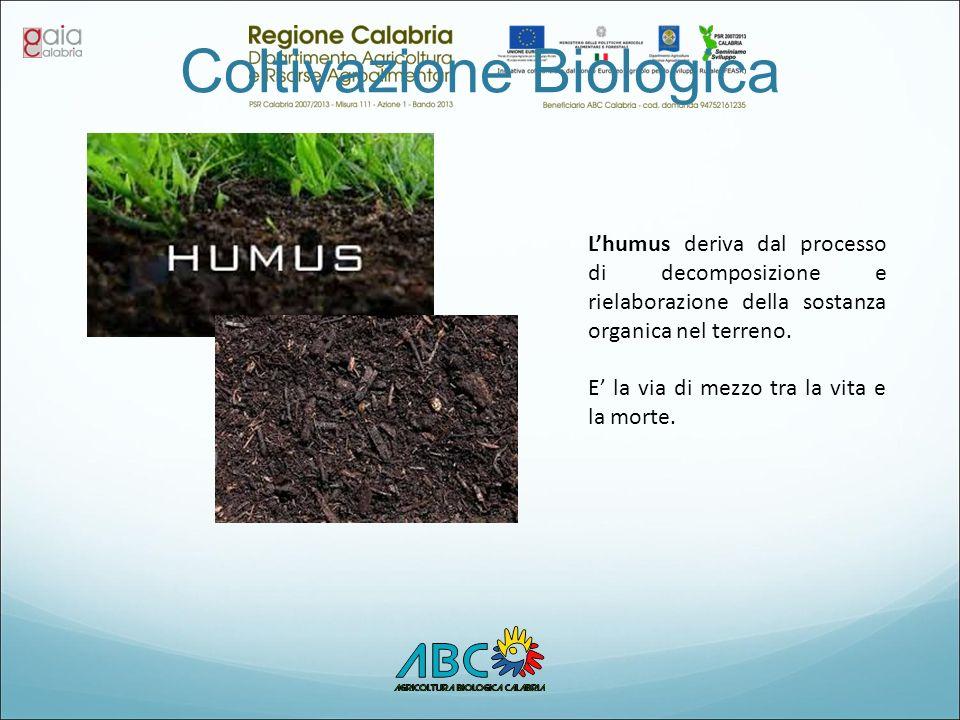 Coltivazione Biologica L'humus deriva dal processo di decomposizione e rielaborazione della sostanza organica nel terreno. E' la via di mezzo tra la v
