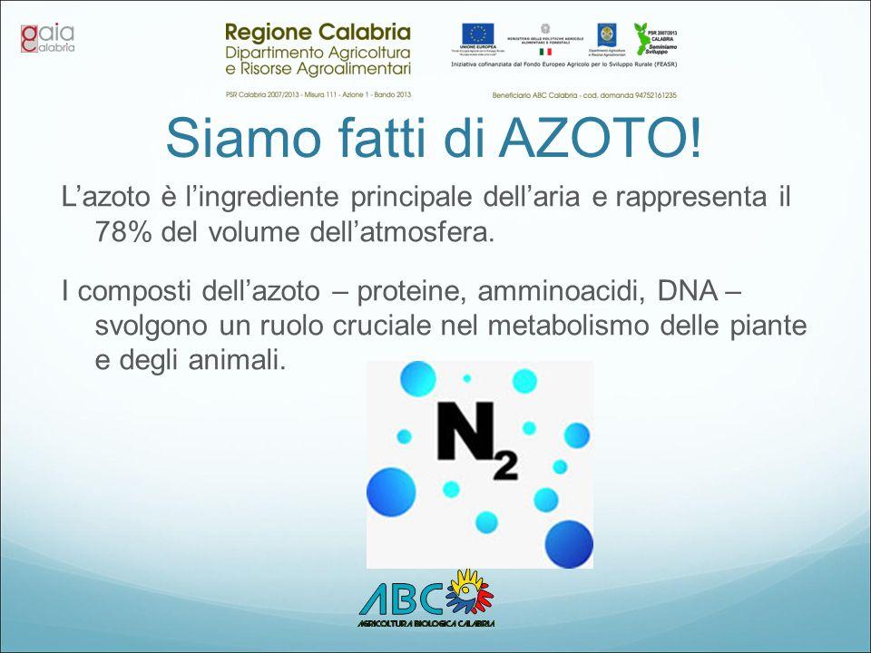 Siamo fatti di AZOTO! L'azoto è l'ingrediente principale dell'aria e rappresenta il 78% del volume dell'atmosfera. I composti dell'azoto – proteine, a