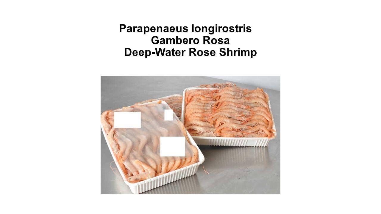Parapenaeus longirostris Gambero Rosa Deep-Water Rose Shrimp