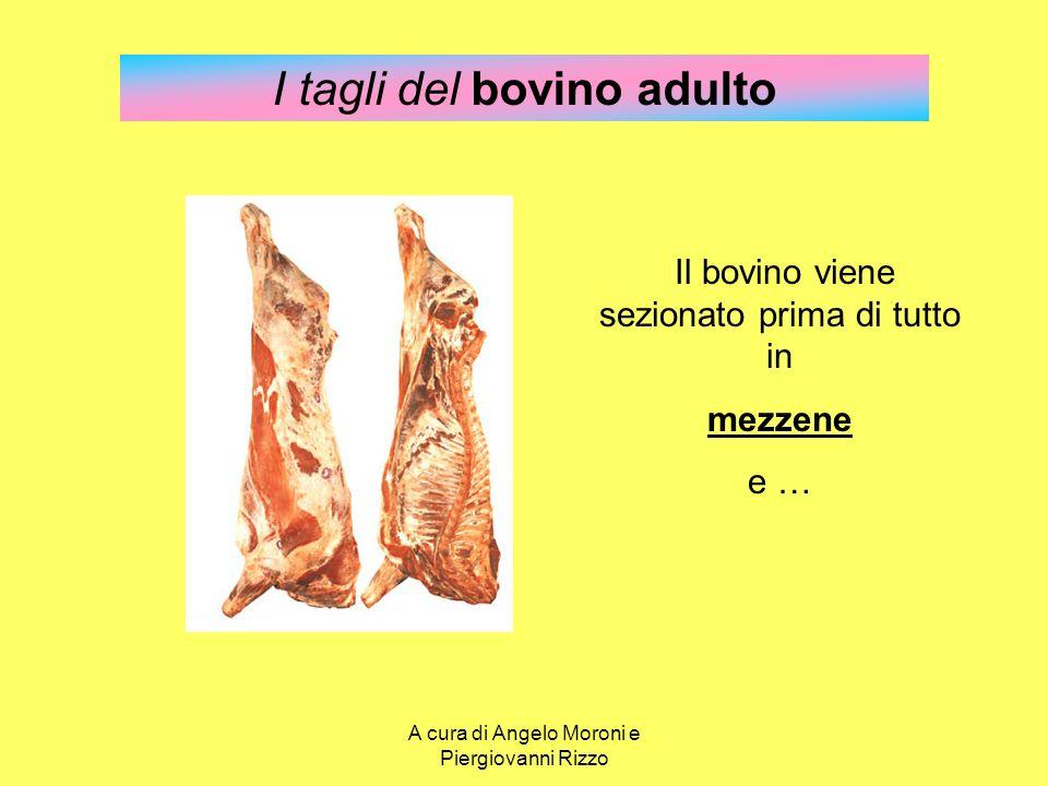 I tagli del bovino adulto Il bovino viene sezionato prima di tutto in mezzene e … A cura di Angelo Moroni e Piergiovanni Rizzo