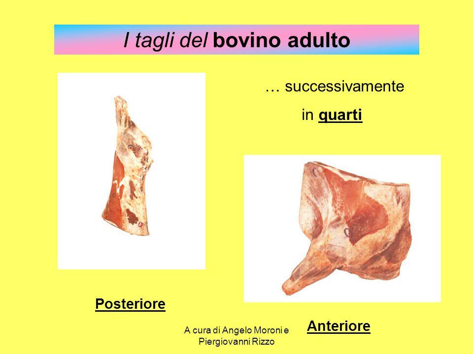 I tagli del bovino adulto … successivamente in quarti Posteriore Anteriore A cura di Angelo Moroni e Piergiovanni Rizzo
