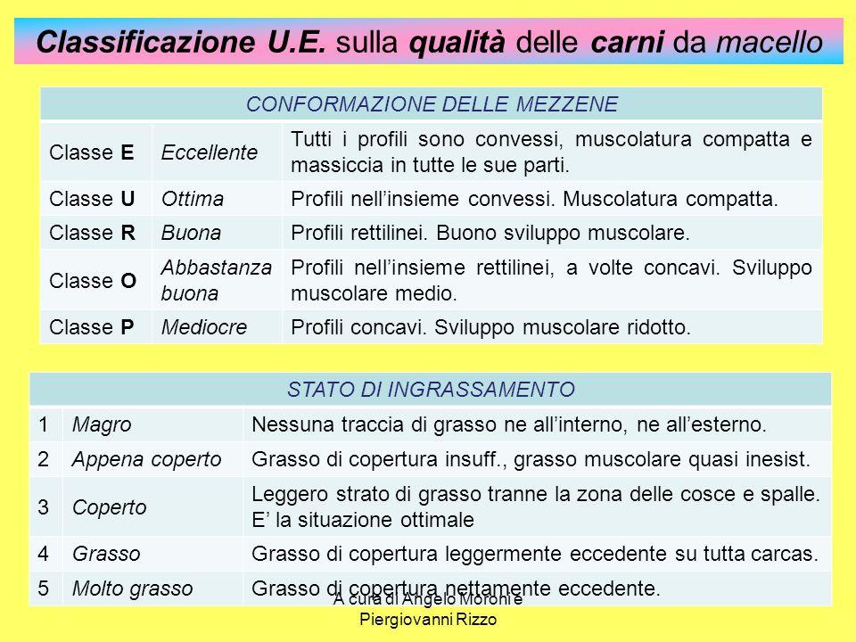 Classificazione U.E. sulla qualità delle carni da macello CONFORMAZIONE DELLE MEZZENE Classe EEccellente Tutti i profili sono convessi, muscolatura co