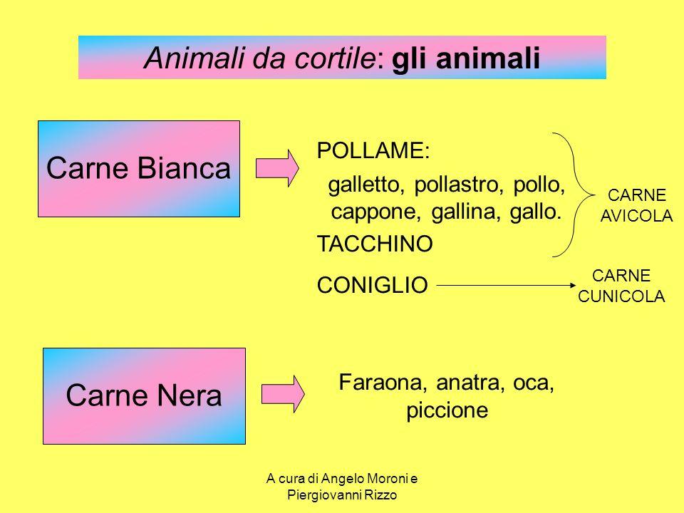 Animali da cortile: gli animali Carne Bianca POLLAME: galletto, pollastro, pollo, cappone, gallina, gallo. TACCHINO CONIGLIO Faraona, anatra, oca, pic
