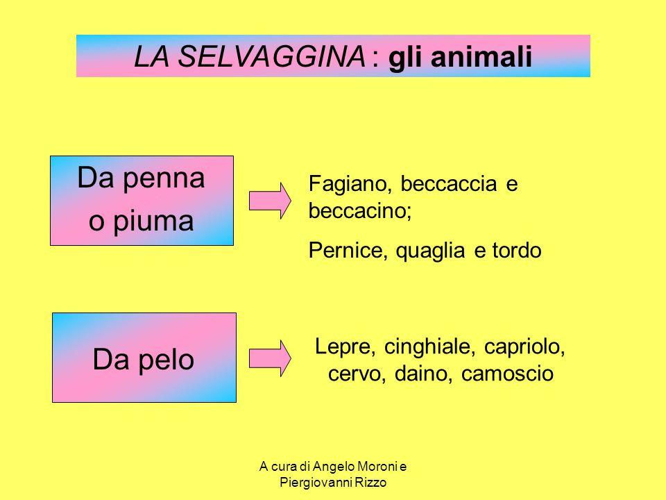 LA SELVAGGINA : gli animali Da penna o piuma Fagiano, beccaccia e beccacino; Pernice, quaglia e tordo Lepre, cinghiale, capriolo, cervo, daino, camosc