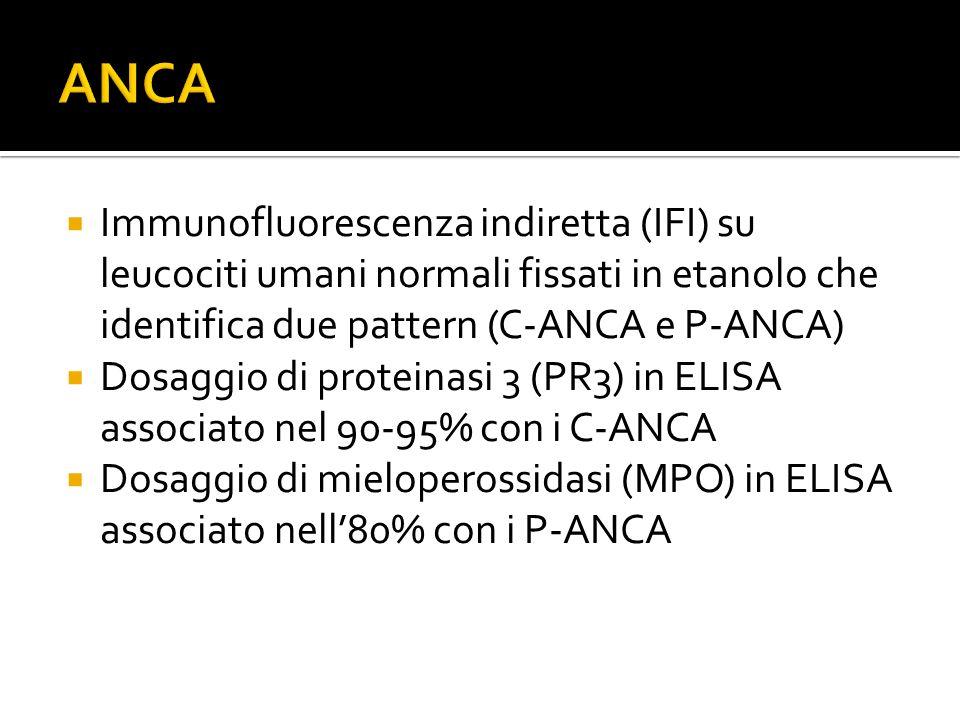  Immunofluorescenza indiretta (IFI) su leucociti umani normali fissati in etanolo che identifica due pattern (C-ANCA e P-ANCA)  Dosaggio di proteina