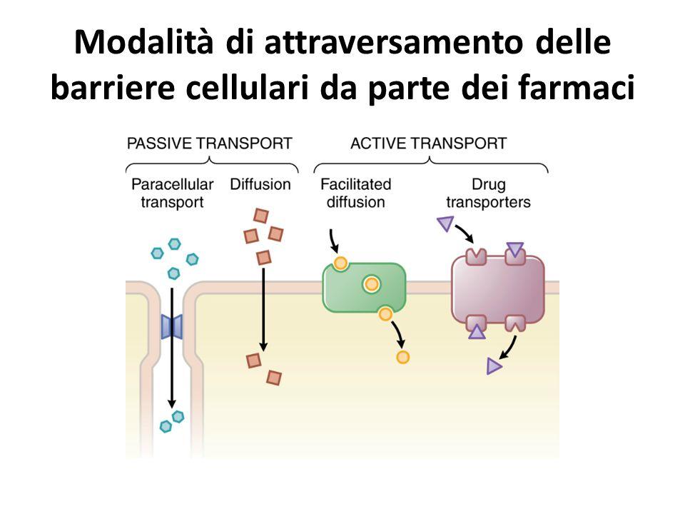 Modalità di attraversamento delle barriere cellulari da parte dei farmaci