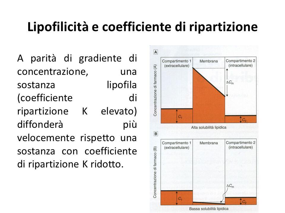 Lipofilicità e coefficiente di ripartizione A parità di gradiente di concentrazione, una sostanza lipofila (coefficiente di ripartizione K elevato) di
