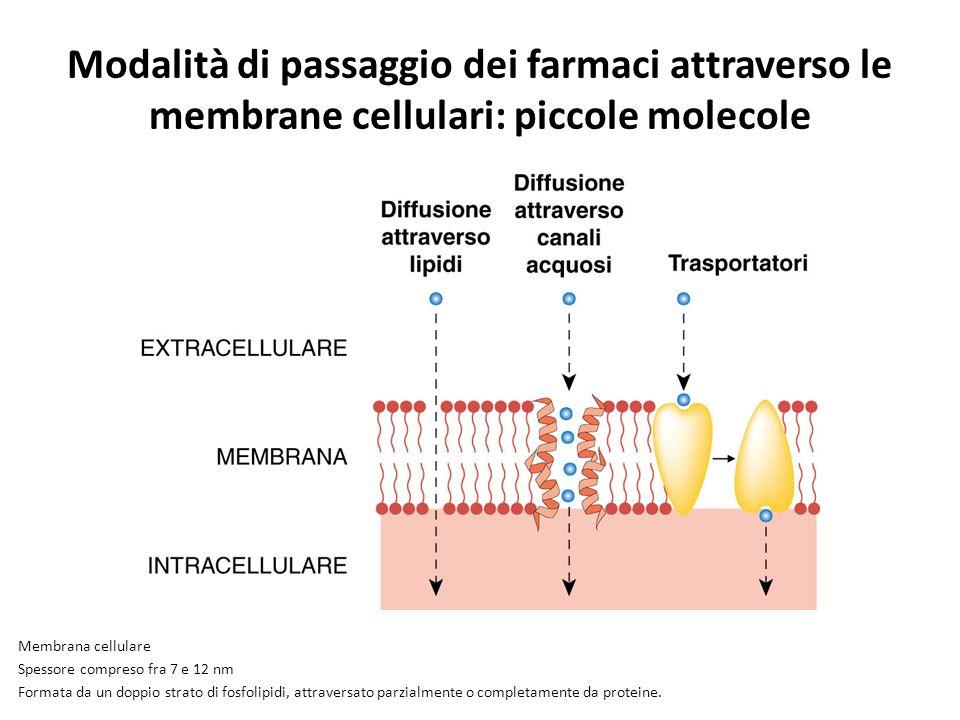 Modalità di passaggio dei farmaci attraverso le membrane cellulari: piccole molecole Membrana cellulare Spessore compreso fra 7 e 12 nm Formata da un