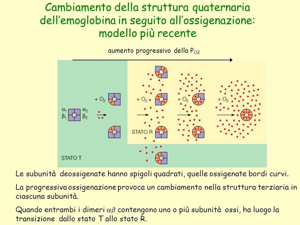 Cambiamento della struttura quaternaria dell'emoglobina in seguito all'ossigenazione: modello più recente aumento progressivo della P O2 Le subunità d