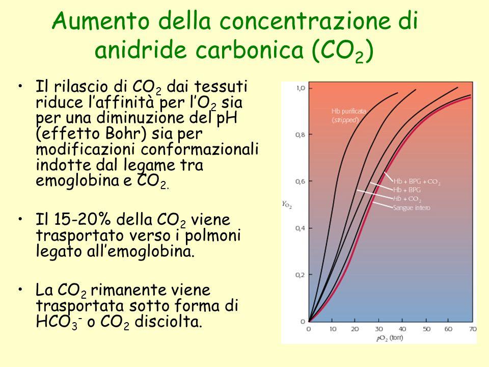 Aumento della concentrazione di anidride carbonica (CO 2 ) Il rilascio di CO 2 dai tessuti riduce l'affinità per l'O 2 sia per una diminuzione del pH