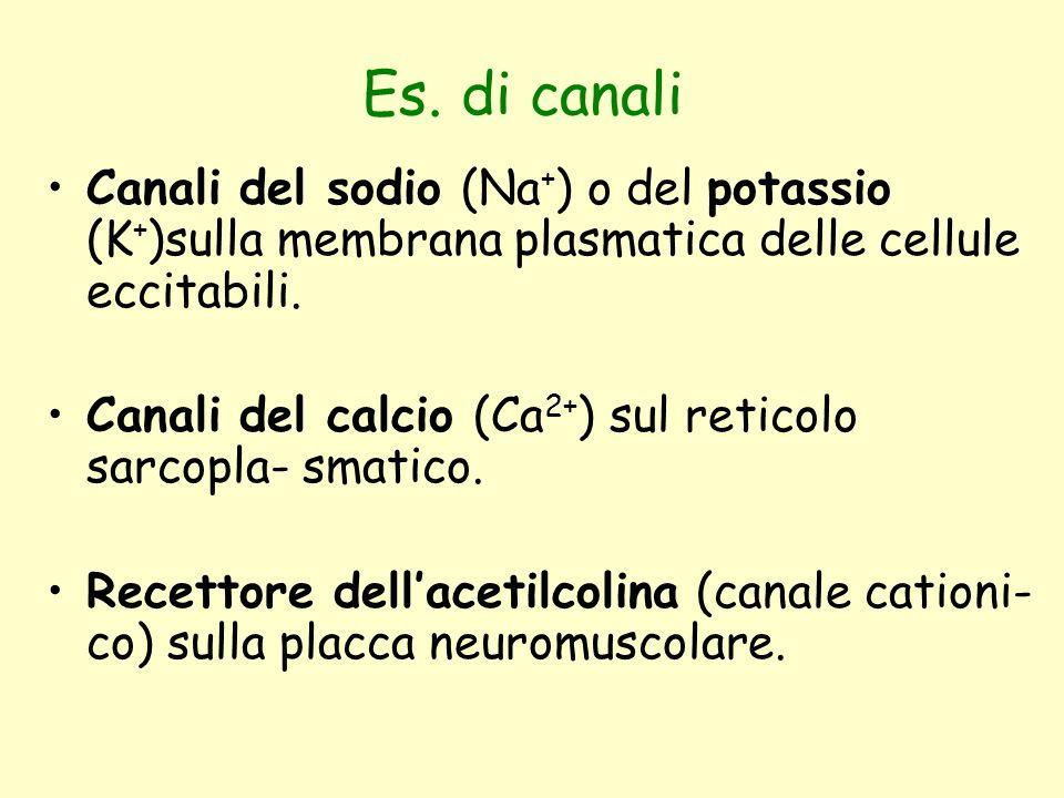 Es. di canali Canali del sodio (Na + ) o del potassio (K + )sulla membrana plasmatica delle cellule eccitabili. Canali del calcio (Ca 2+ ) sul reticol