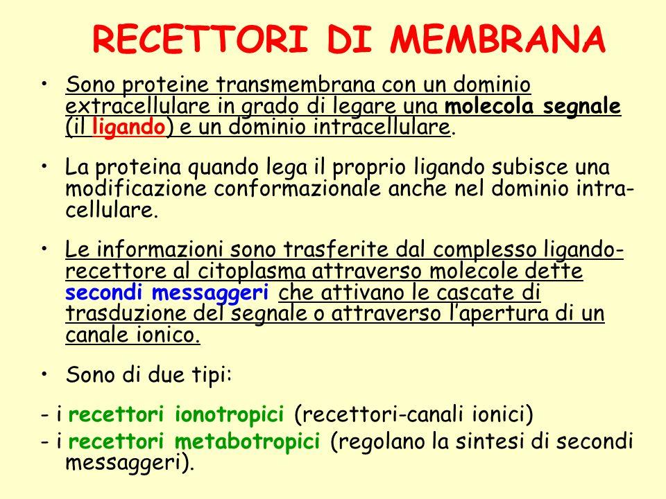 RECETTORI DI MEMBRANA Sono proteine transmembrana con un dominio extracellulare in grado di legare una molecola segnale (il ligando) e un dominio intr