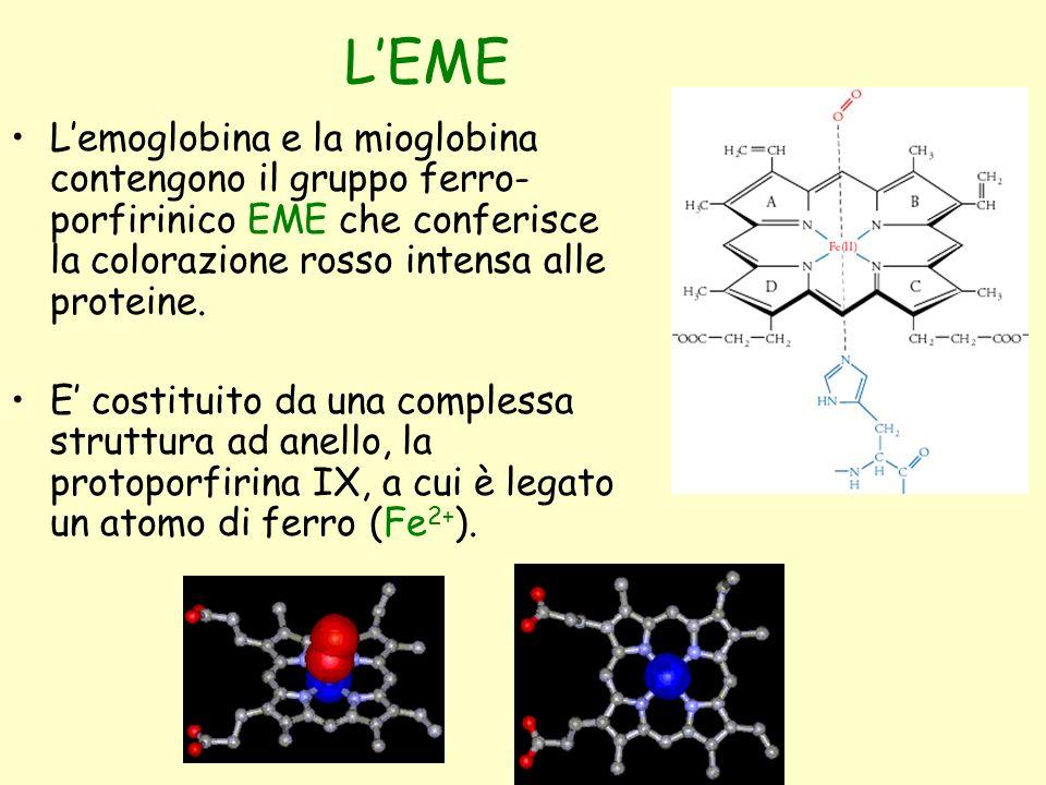 L'EME L'emoglobina e la mioglobina contengono il gruppo ferro- porfirinico EME che conferisce la colorazione rosso intensa alle proteine. E' costituit