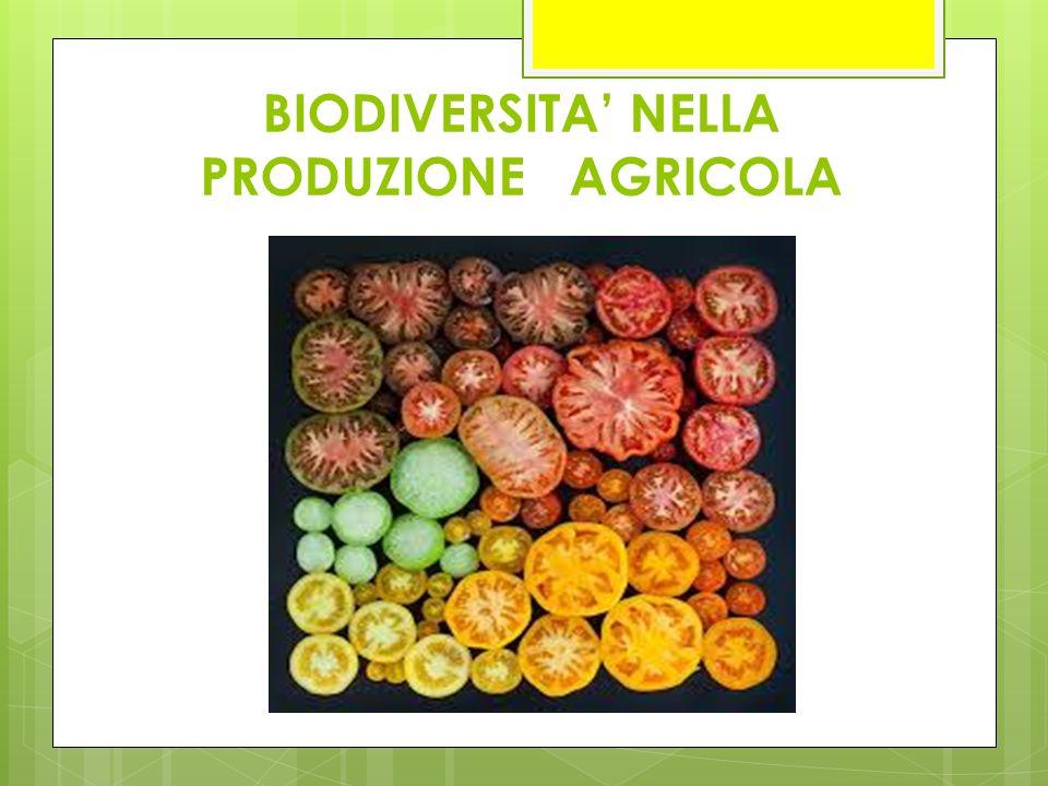 BIODIVERSITA' NELLA PRODUZIONE AGRICOLA