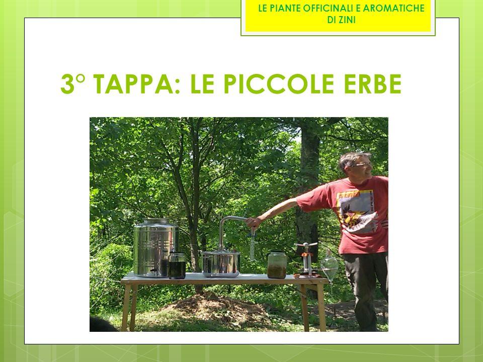 3° TAPPA: LE PICCOLE ERBE LE PIANTE OFFICINALI E AROMATICHE DI ZINI